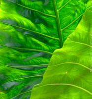 I felt like I must be on acid, the colors of the vegetation were so vibrant!