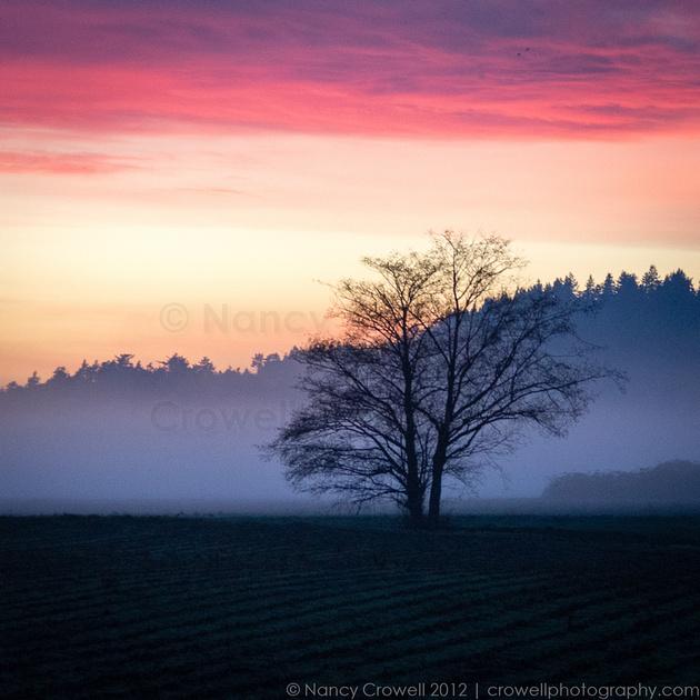 Fog rolls in at sunset near La Conner, Washington.
