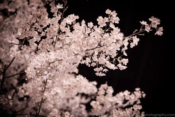 Cherry blossoms against a black night sky. (c) Nancy K. Crowell | Crowell Photography