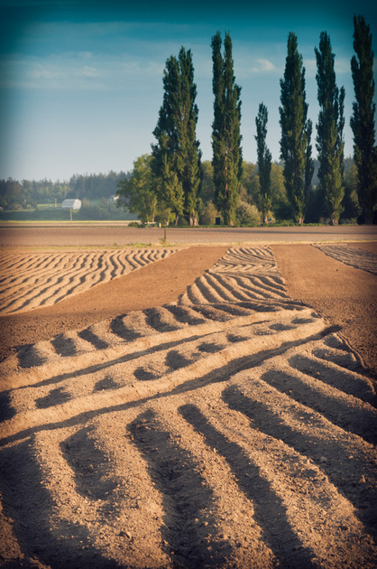 Patterns left by tractors in the fields