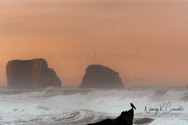 Photo of crow resting on driftwood silhouetted against violent surf, big rocks and an orange sky.