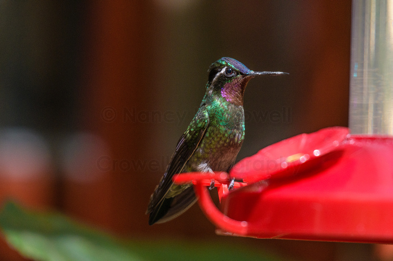 A brightly colored hummingbird perches on a feeder.