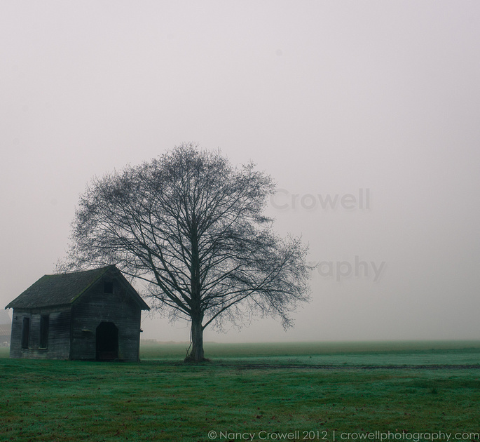 An abandoned barn building next to a lone tree looks especially isolated in the fog.