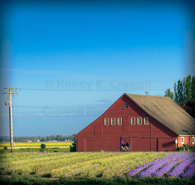 A couple on a bicycle built for two happened to ride past as I was shooting this field and barn.