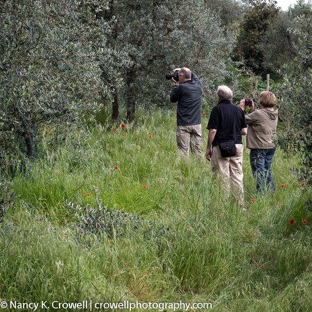 Chasing olive trees.