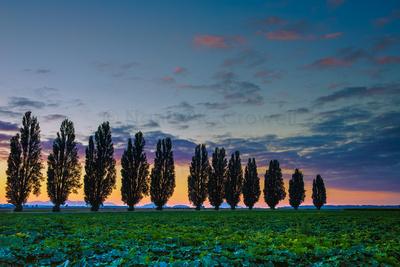 Poplar row