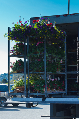 Baskets and baskets of flowers being unloaded.