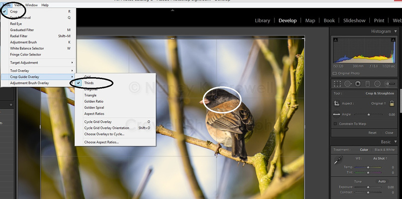 An image in Lightroom with the crop guides overlay tool showing.